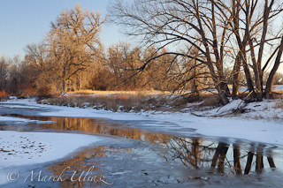 Cache la Poudre River in winter