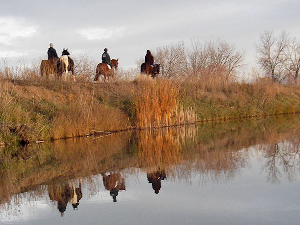 paddling with horses
