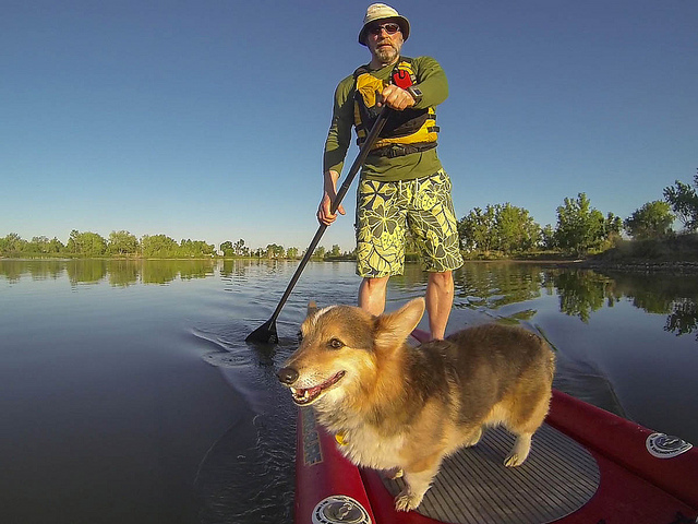 Stand Up Paddling with Pixel, the Water Corgi