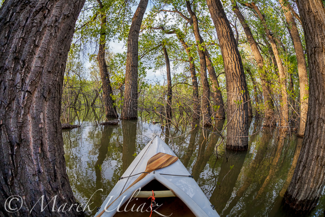Paddling Canoe through a Magic Forest