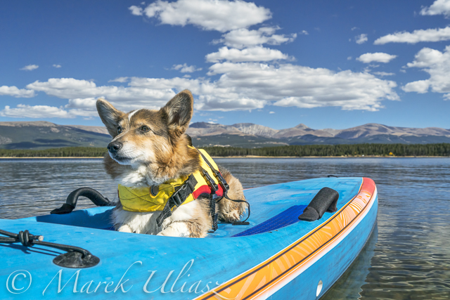 dog and Starboard All Star SUP on Turquoise Lake, CO